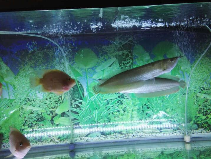 千里狼(TRINIDAD WOLF)PH测试笔酸碱度ph值鱼缸水质检测仪器酸度计水族检测笔 0.01精度大屏款 晒单图