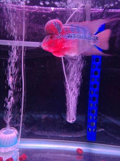 sera 仟湖OF火山气泵单双孔高效养鱼增氧泵超静音水族箱鱼缸氧气泵 火山气泵7000 晒单图