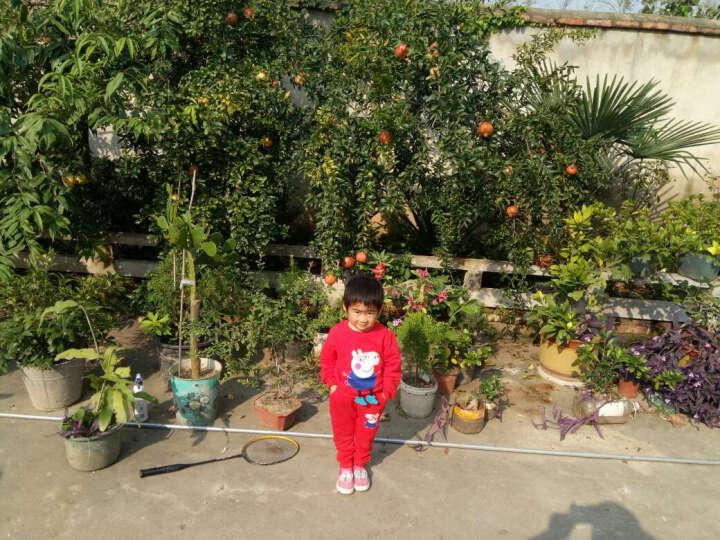 童装女童套装春装儿童套装1-2-3一5岁女宝宝秋冬季两件套小女孩衣服 小猪款红色 90码建议85-90cm1-2岁宝宝 晒单图