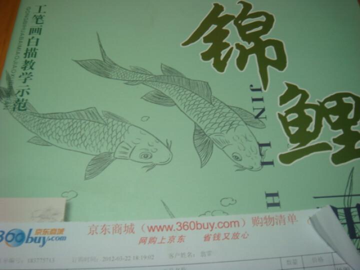 工笔画白描教学示范 锦鲤画稿 合适初学者的白描