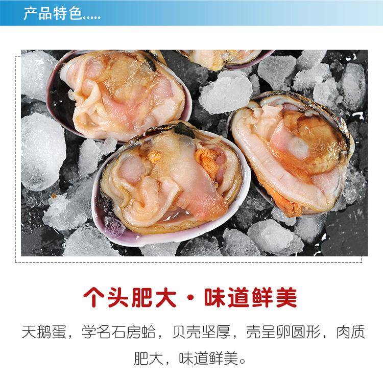 产品特色个头肥大·味道鲜美天鹅蛋,学名石房蛤,贝壳坚厚,壳呈卵圆形,肉质肥大,味道鲜美。-推好价 | 品质生活 精选好价