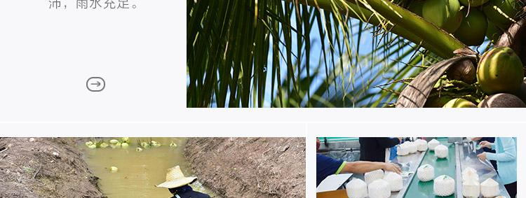 椰青模板一_09.jpg