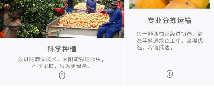 进口红西柚葡萄柚 柚子 优选大果4个 单果约320-380g 生鲜进口水果 海外直采