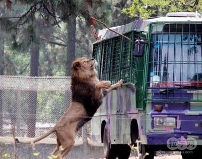 0武汉动物园年票_九峰山动物园成人年票京品惠武汉站
