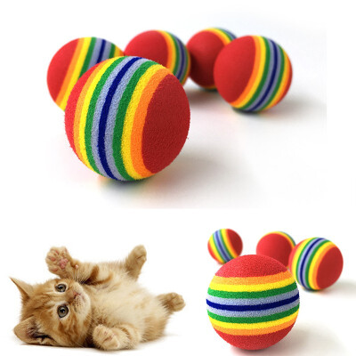 Puppy cat grinding colorful toy ball