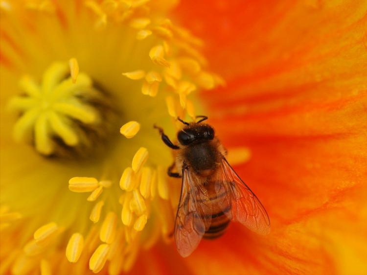 花粉 頭痛