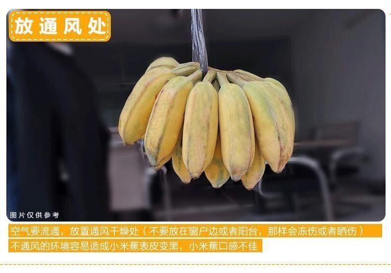 54175-广西小米蕉新鲜当季水果自然熟芭蕉水果 带箱10斤甄选-详情图