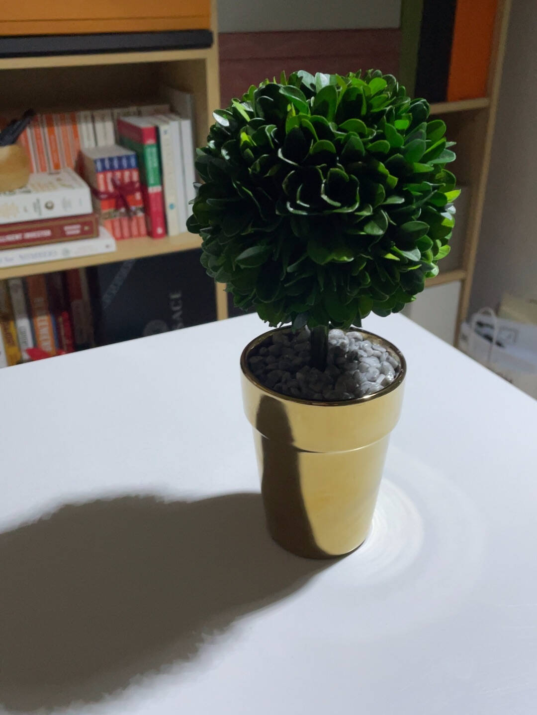 THEBEAST/野兽派幸福树(永生花树)保鲜花盒生日礼物送女生幸福树(黄杨)