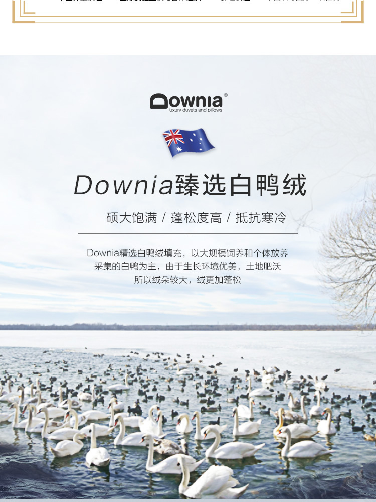 Downia澳洲被芯家纺95%白鸭绒被春秋被羽绒被全棉面料透气被子填充量335g180*220cm